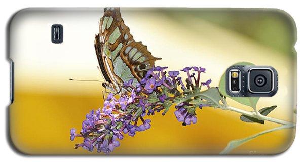 Butterfly Lavender Branch Galaxy S5 Case by Andrea Hazel Ihlefeld