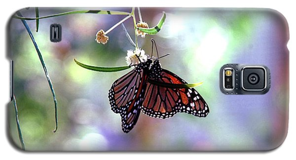 Galaxy S5 Case featuring the photograph Butterfly Meet-up by Tam Ryan