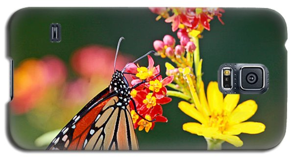 Galaxy S5 Case featuring the photograph Butterfly Monarch On Lantana Flower by Luana K Perez