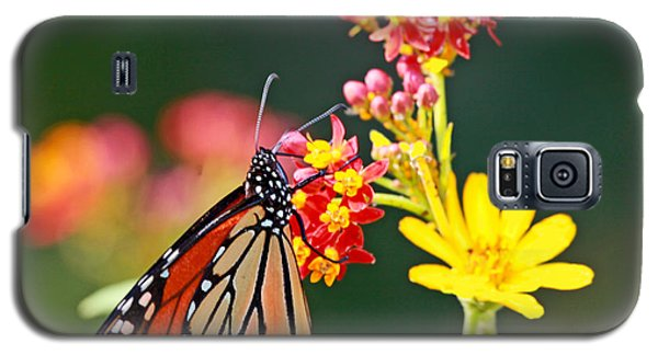 Butterfly Monarch On Lantana Flower Galaxy S5 Case by Luana K Perez