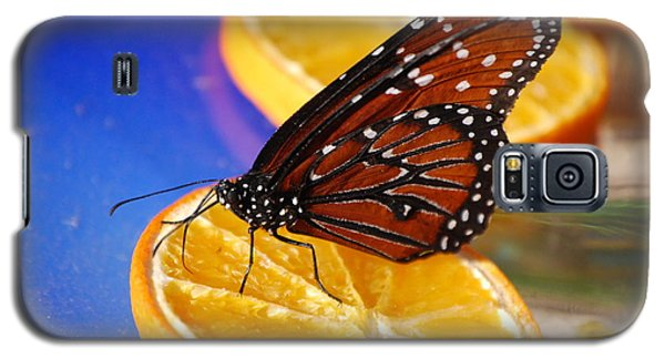 Galaxy S5 Case featuring the photograph Butterfly Nectar by Tam Ryan