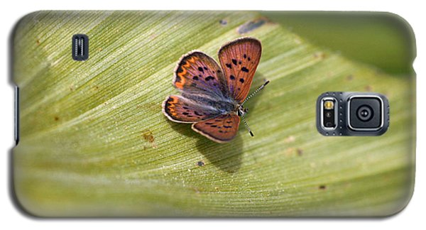 Galaxy S5 Case featuring the photograph Butterfly On Cornflower Leaf by Mitch Shindelbower