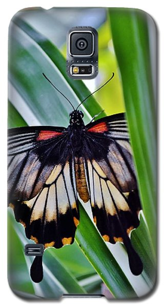 Galaxy S5 Case featuring the photograph Butterfly On Leaf by Werner Lehmann