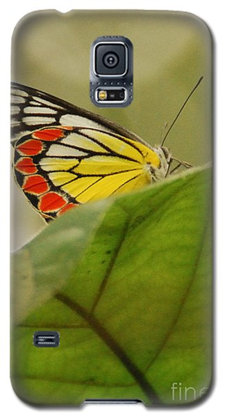 Galaxy S5 Case featuring the photograph Butterfly Resting by Fotosas Photography