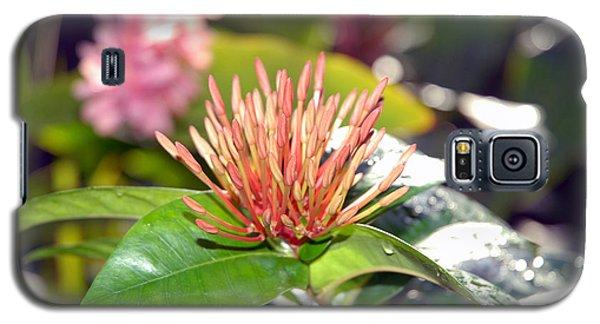 Butterfly Snack Galaxy S5 Case