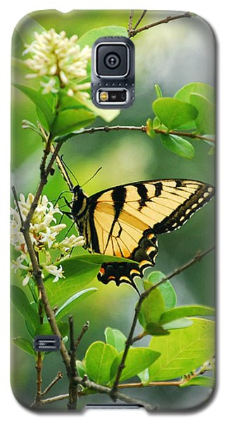Galaxy S5 Case featuring the photograph Butterfly Tiger Swallow by Peggy Franz