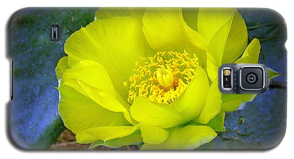Cactus Flower Galaxy S5 Case by Judi Bagwell