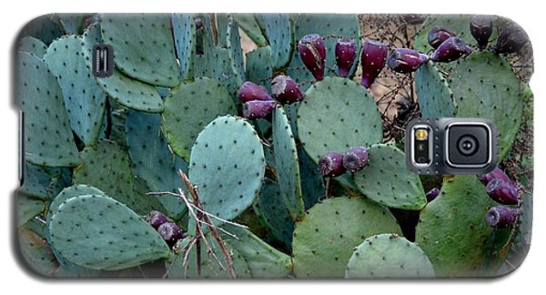 Galaxy S5 Case featuring the photograph Cactus Plants by Maria Urso