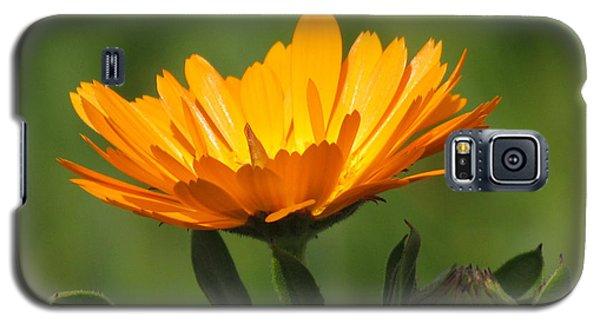 Galaxy S5 Case featuring the photograph Calendula Bloom by Bonnie Muir
