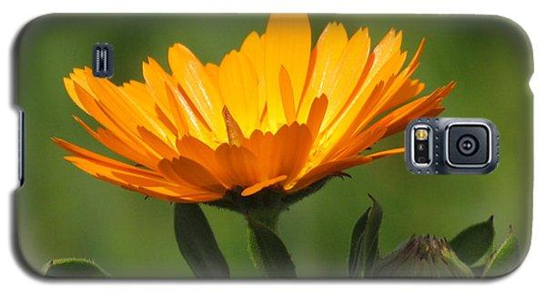Calendula Bloom Galaxy S5 Case
