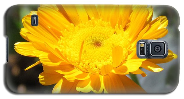 Galaxy S5 Case featuring the photograph Calendula Blossom by Bonnie Muir