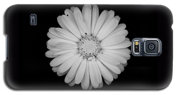 Calendula Flower - Black And White Galaxy S5 Case by Laura Melis