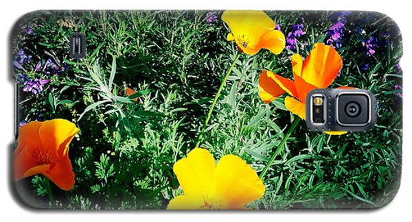 Galaxy S5 Case featuring the photograph California Poppy by Nina Prommer