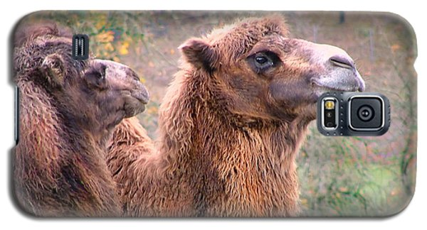Galaxy S5 Case featuring the photograph Calm Camels by Wendy McKennon