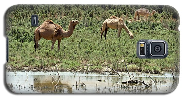 Galaxy S5 Case featuring the photograph Camels 02 by Arik Baltinester