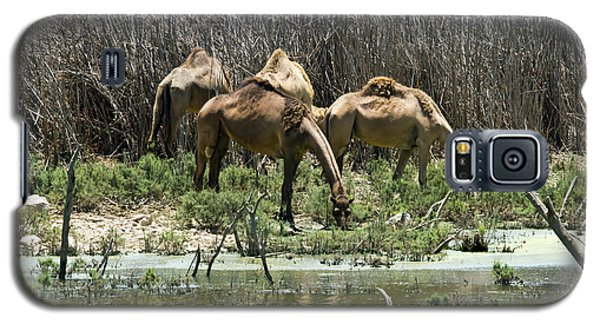 Galaxy S5 Case featuring the photograph Camels At The Water by Arik Baltinester