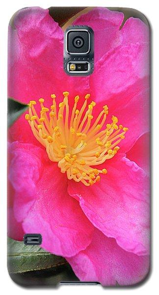 Camillia Galaxy S5 Case