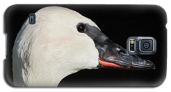Galaxy S5 Case featuring the photograph Trumpeter Swan by Maciek Froncisz
