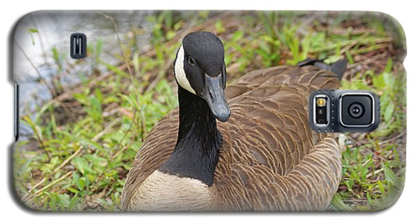 Canadian Goose Resting Galaxy S5 Case by J Jaiam