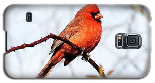 Cardinal 1 Galaxy S5 Case by Joe Faherty