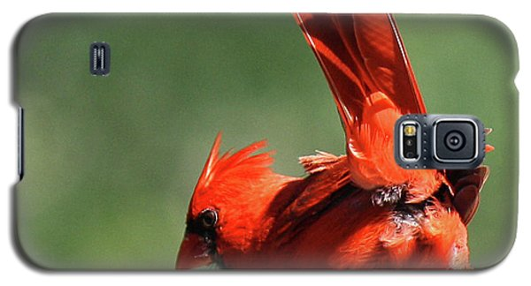 Galaxy S5 Case featuring the photograph Cardinal-a Picture Is Worth A Thousand Words by Roena King