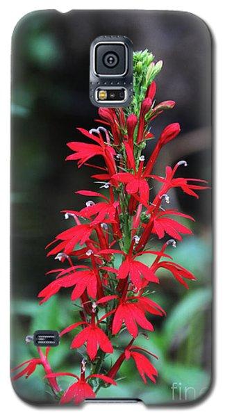 Cardinal Flower Galaxy S5 Case