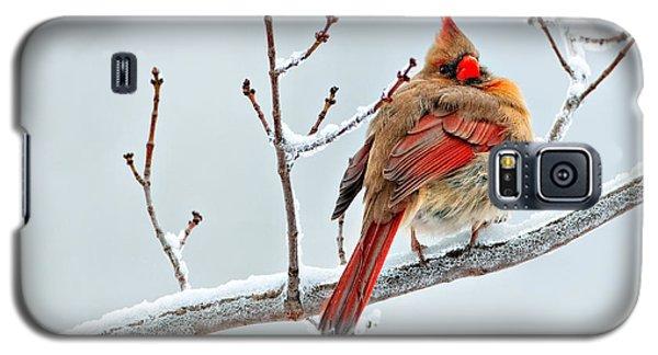 Cardinal I The Snow  Galaxy S5 Case