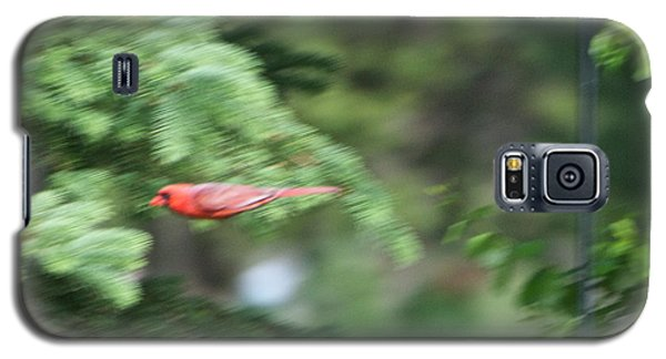Galaxy S5 Case featuring the photograph Cardinal In Flight by Thomas Woolworth