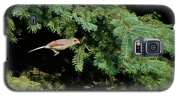 Galaxy S5 Case featuring the photograph Cardinal Just A Hop Away by Thomas Woolworth