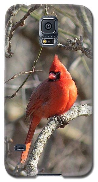 Cardinal Redbird Galaxy S5 Case by Rebecca Overton
