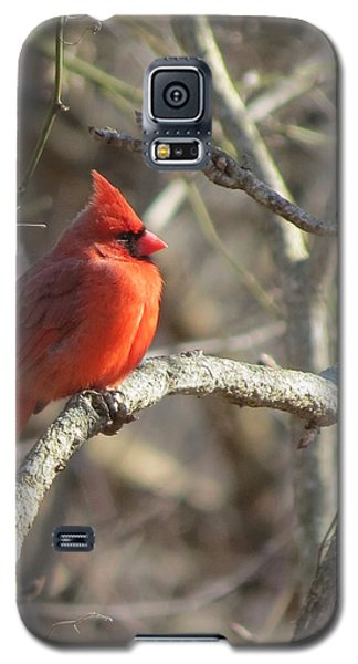 Cardinal Redbird Sunlit Galaxy S5 Case by Rebecca Overton
