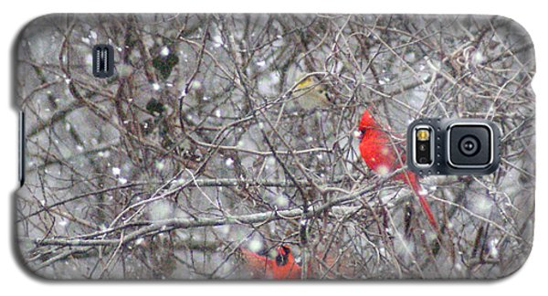 Galaxy S5 Case featuring the photograph Cardinals In The Snow by Rick Friedle