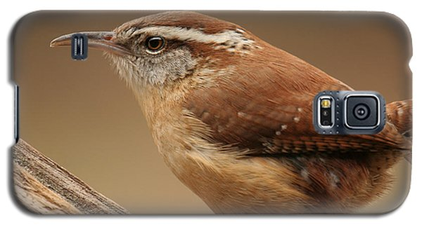 Galaxy S5 Case featuring the photograph Carolina Wren by Daniel Reed