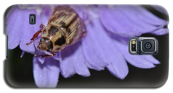 Carpet Beetle On Stokes Aster Galaxy S5 Case