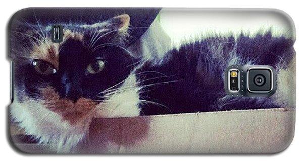 Funny Galaxy S5 Case - #cat #cardboardbox #pet #silly #animal by Mandy Shupp