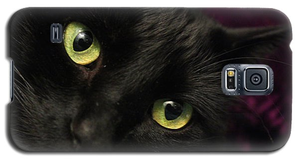 Galaxy S5 Case featuring the photograph Cat Eyes by Tyra  OBryant