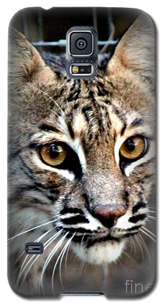 Galaxy S5 Case featuring the photograph Cat Fever by Kathy  White