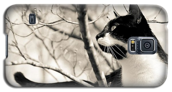 Cat In A Tree In Black And White Galaxy S5 Case
