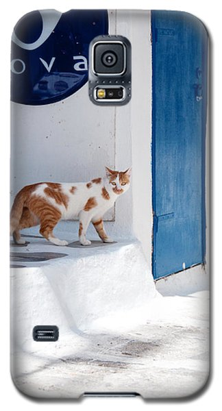 Galaxy S5 Case featuring the photograph Cat In Mykonos by Laura Melis
