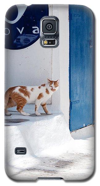 Cat In Mykonos Galaxy S5 Case by Laura Melis
