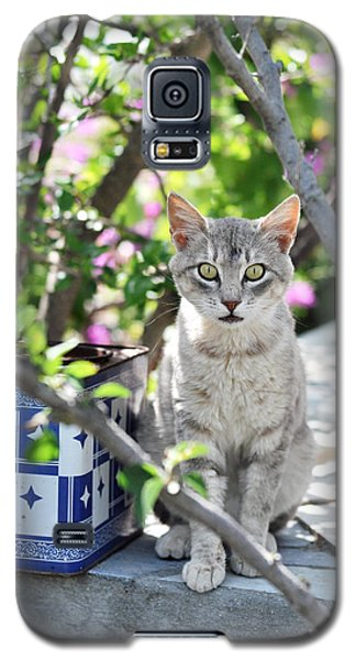 Galaxy S5 Case featuring the photograph Cat Of Mykonos by Laura Melis