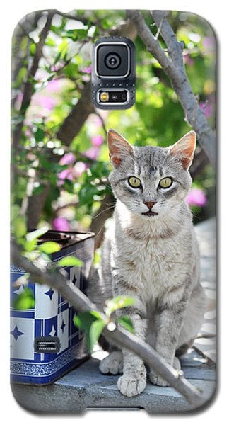 Cat Of Mykonos Galaxy S5 Case by Laura Melis