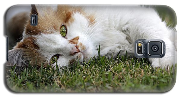 Galaxy S5 Case featuring the photograph Cat On The Grass by Raffaella Lunelli