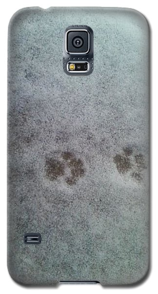 Cat Tracks In The Snow Galaxy S5 Case by Gerald Strine