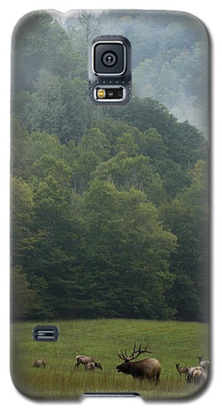 Galaxy S5 Case featuring the photograph Cataloochee Elk by Carrie Cranwill