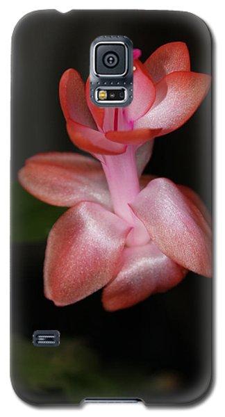 Catcus Flower Galaxy S5 Case by Deborah Hughes