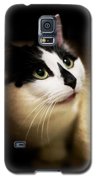 Catsablanca Galaxy S5 Case by JM Photography