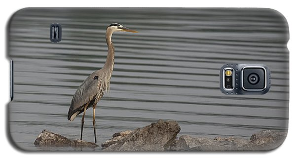 Galaxy S5 Case featuring the photograph Cautious by Eunice Gibb