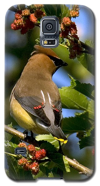 Galaxy S5 Case featuring the photograph Cedar Waxwing Dsb056 by Gerry Gantt