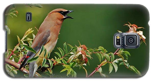 Cedar Waxwing Galaxy S5 Case by Jim Boardman